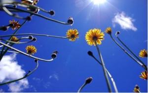 fotosíntesis_plantas