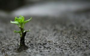 reproducción_plantas
